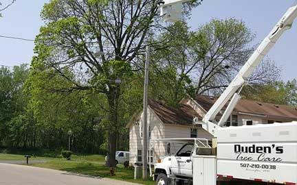 Dudens-Tree-Services
